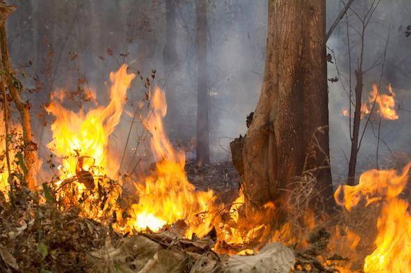 Fire-Thailand forest (c) Toa55_shutterstock_273190859.jpg