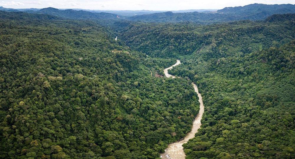 Batang Toru landscape-SOCP.jpeg