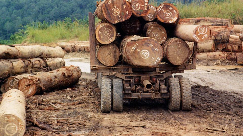 illegal_timber.jpg