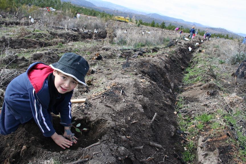 Henri planting tree (DSalt).JPG