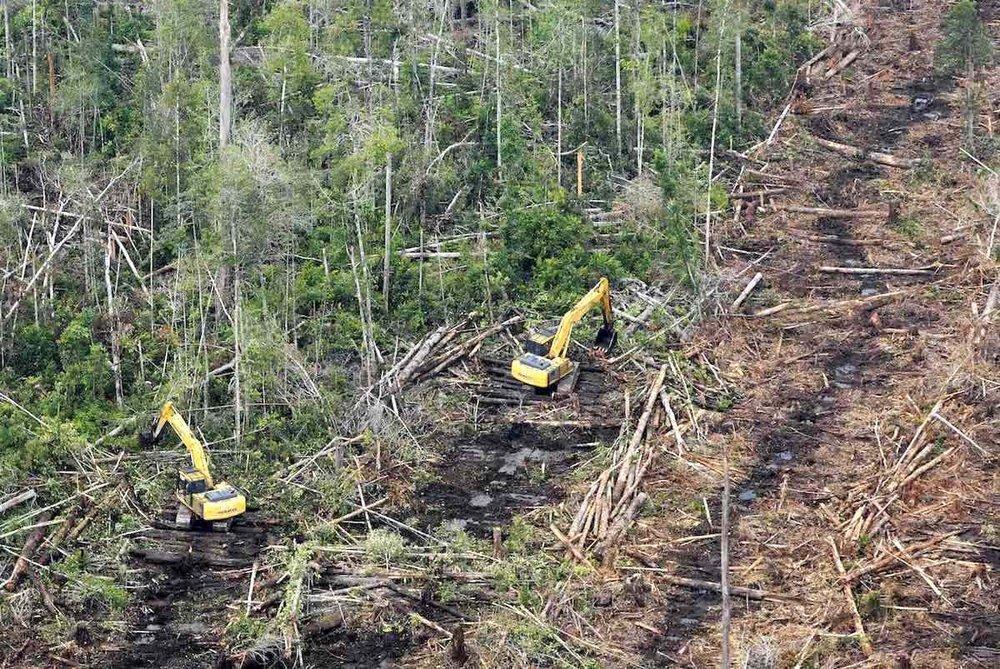 Oil-palm-W-Kalimantan-RSPO-member.jpg