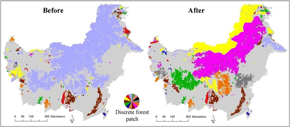 If completed as planned, the projects will sharply increase forest fragmentation and reduce forest connectivity for wildlife (forests with different colors are in separate, isolated tracts).