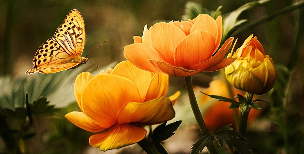 flowers-butterfly19830_1280-Pixabay.jpeg