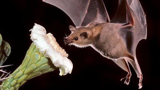 Bat-and-Cactus.jpg
