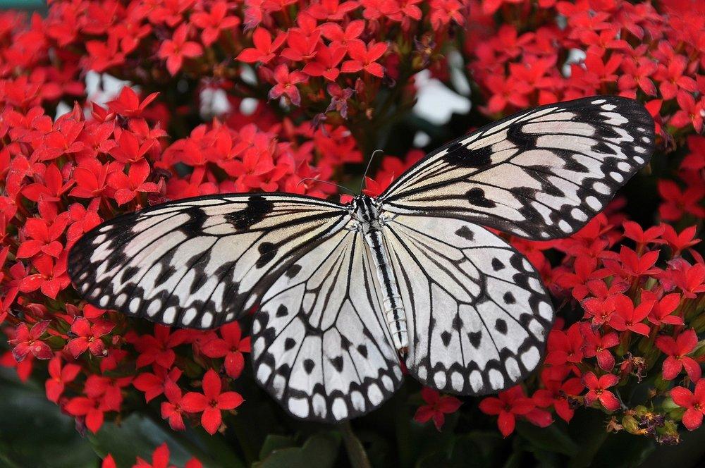 butterfly-1218884_1280-Pixabay.jpeg