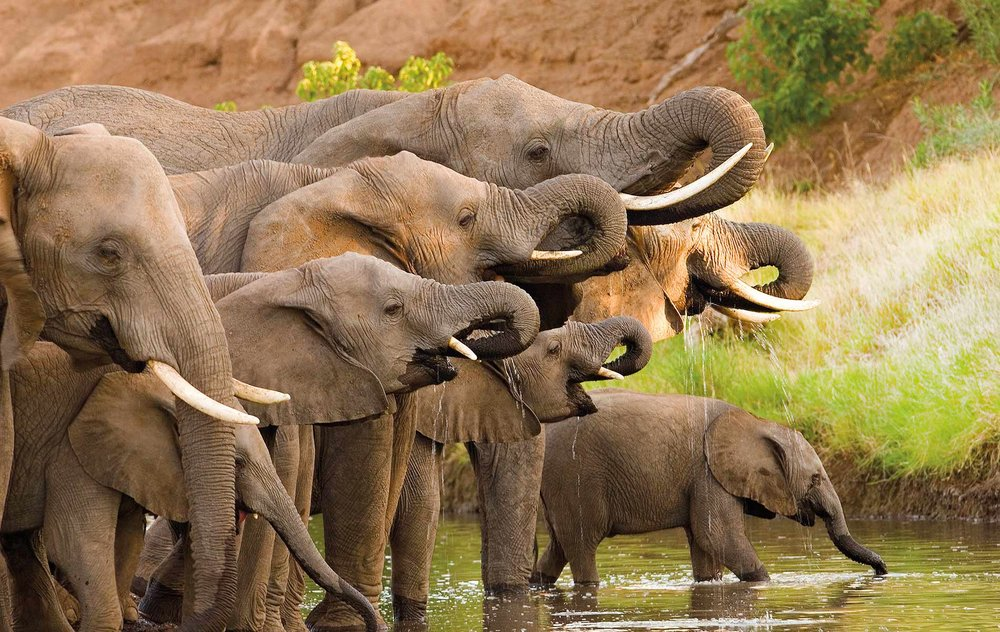 cambodia-elephants-hero.jpg