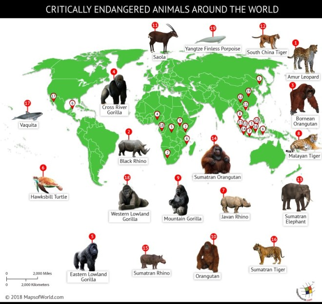 world-map-endangered-animals.jpg