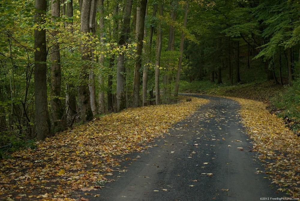 autumn-path.jpg
