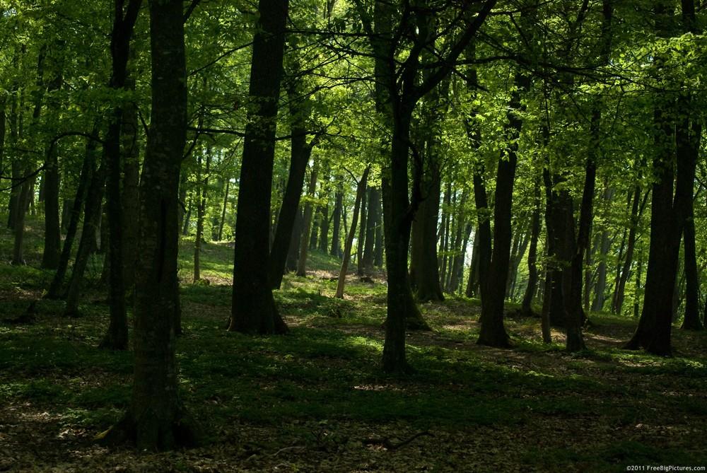 shady-forest.jpg
