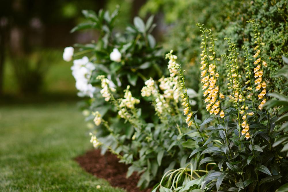 150609_garden_008.jpg