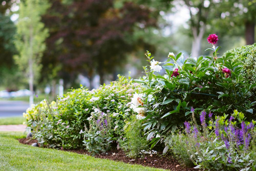 150609_garden_009.jpg