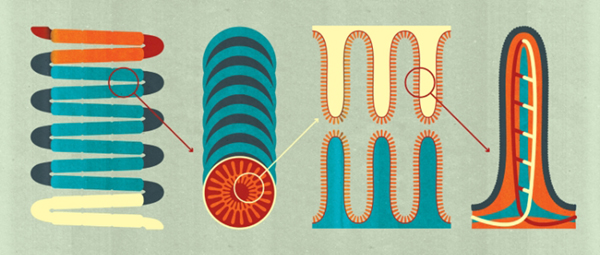 Project:Small Intestine Info-graphics, 2016