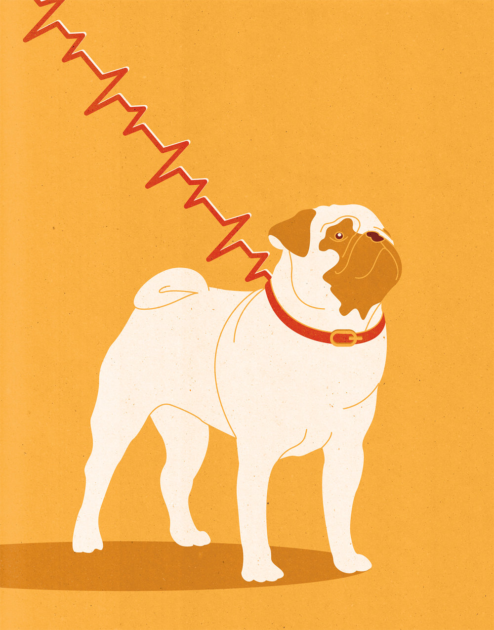 Project:    Dog ownership is associated with a reduction in heart disease risk,    Client:    Forskning För Hälsa magazine by the Swedish Heart-Lung Foundation, 2018