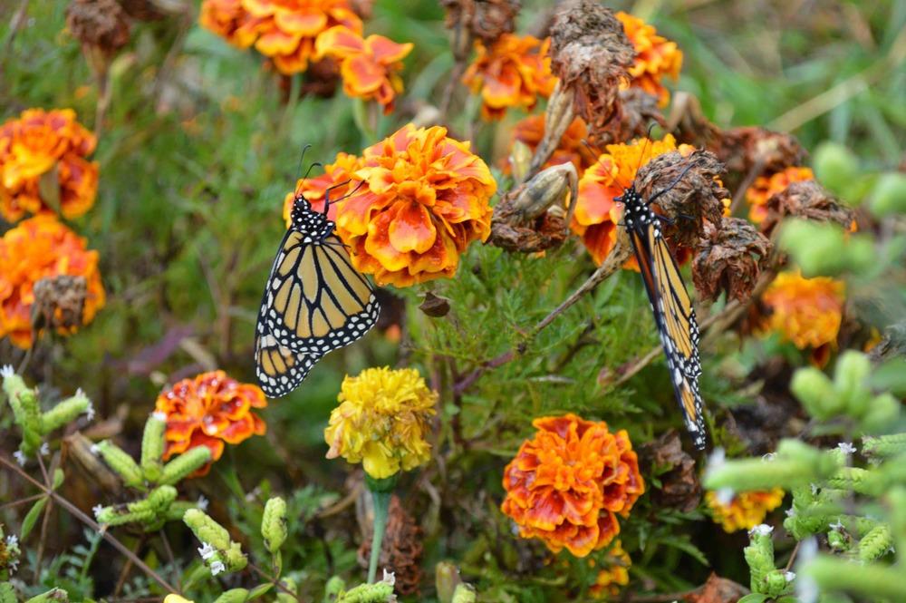 butterfly2015.jpg