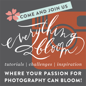 bloom affiliate banner 300px.png