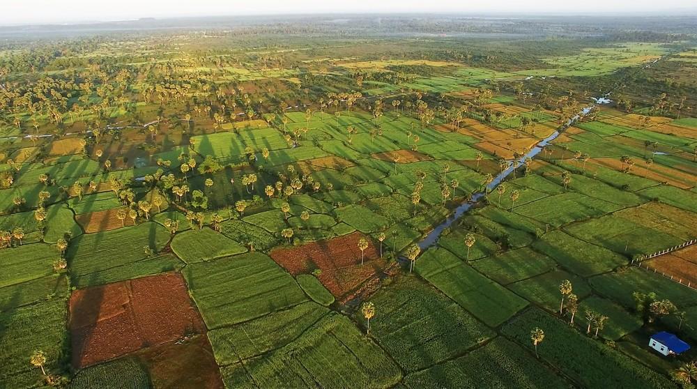 siem reap sunrise rice paddies