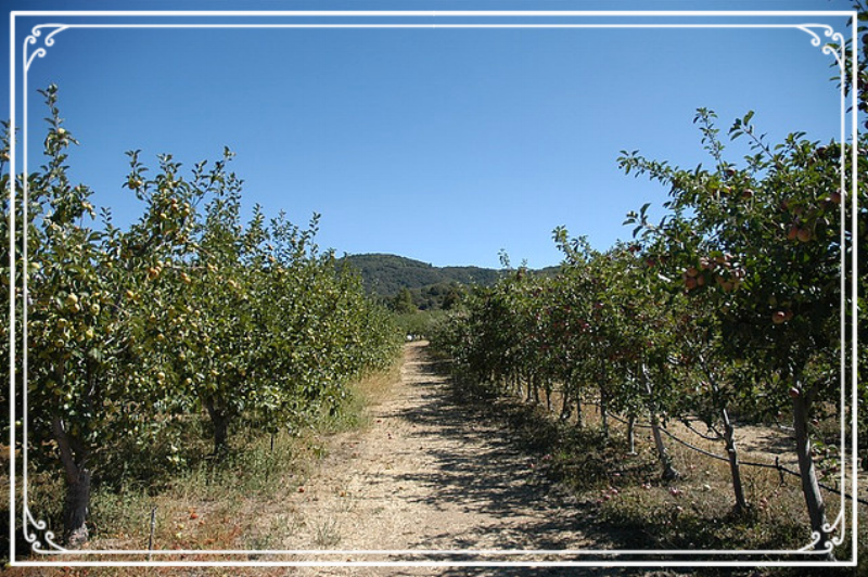 Learn more about the orchard...