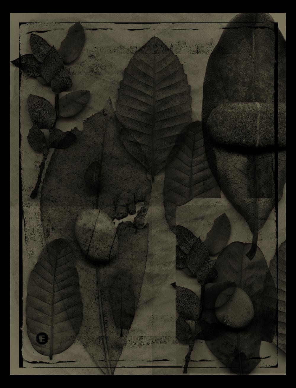 leafpapre4xx.jpg