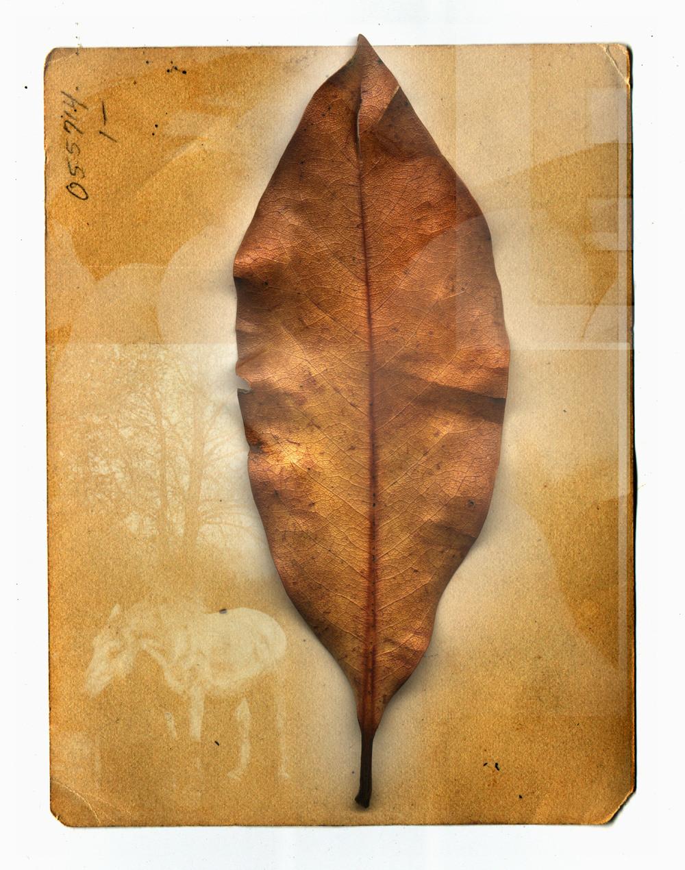 leafxx.jpg