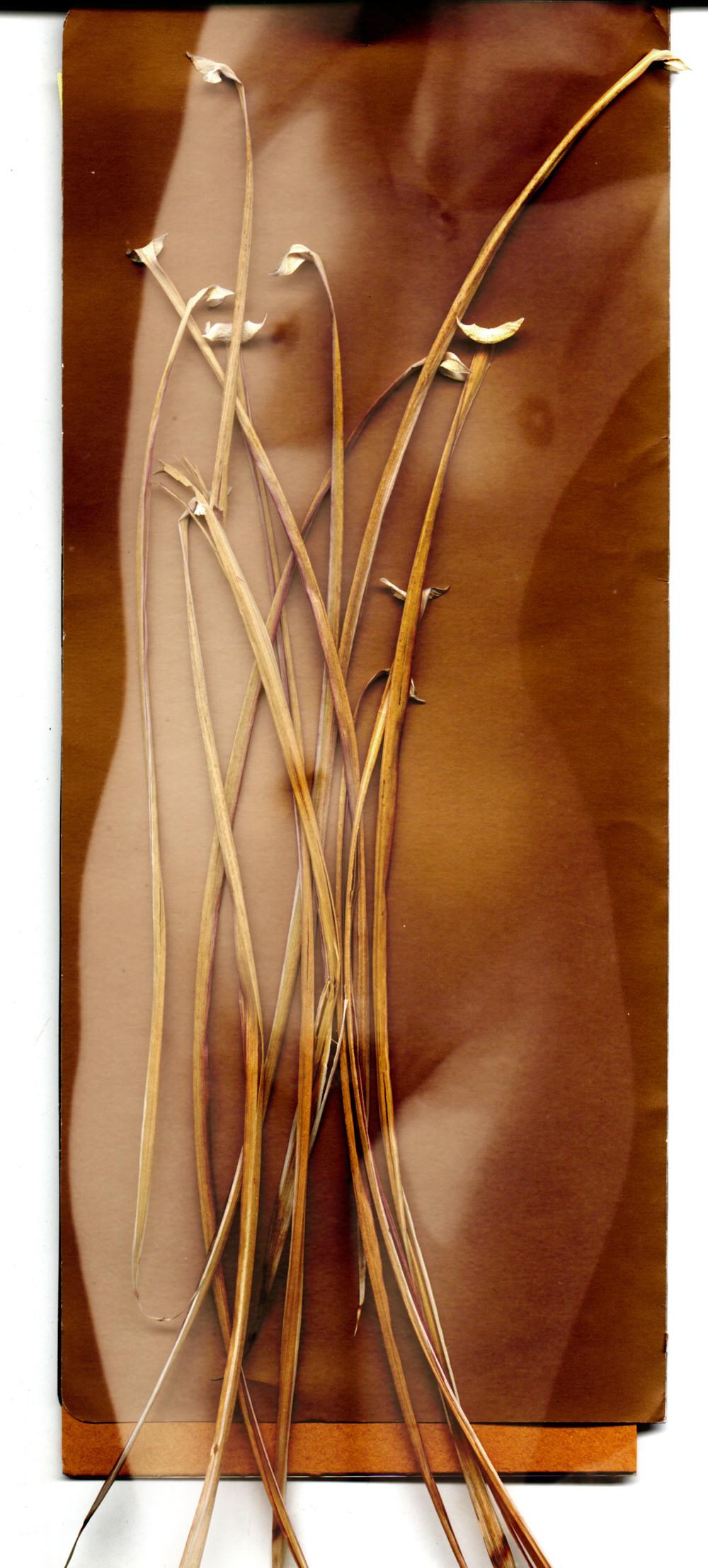 serenagrass2.jpg