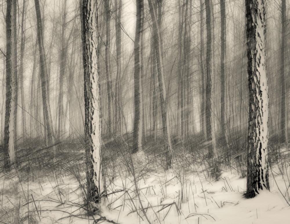 Spring Snow Stormblur.jpg