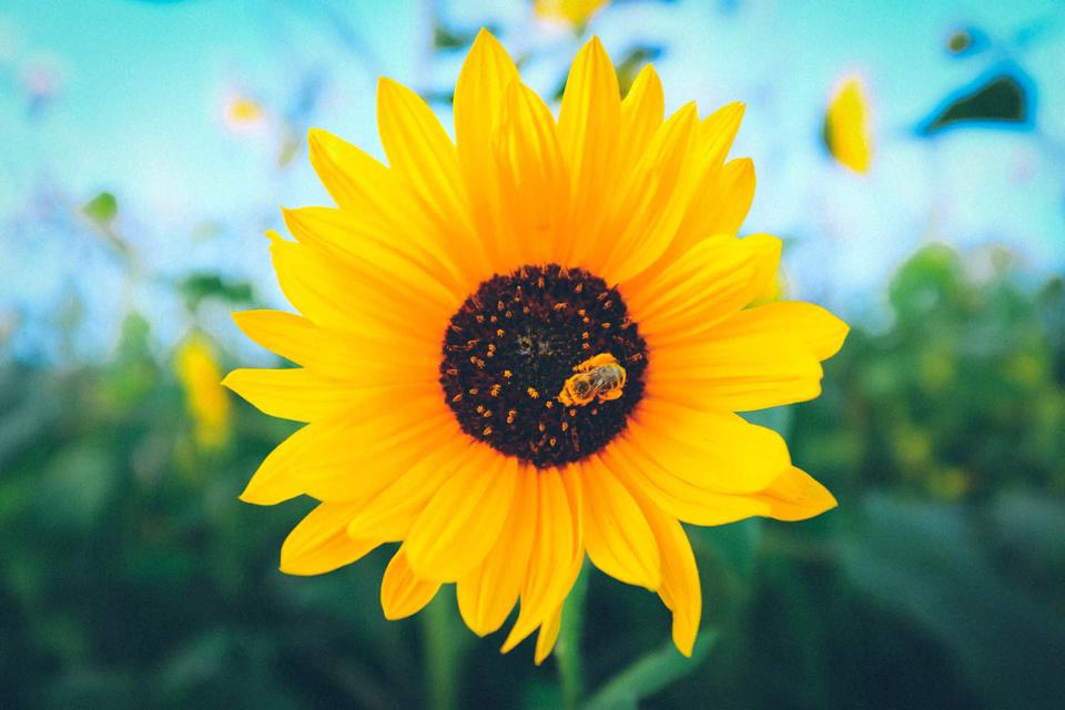 FlowerBee.jpg