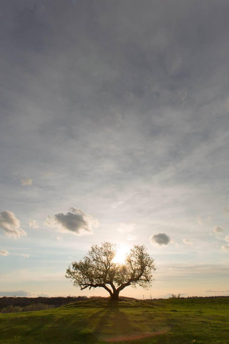 TreeOfLife.jpg