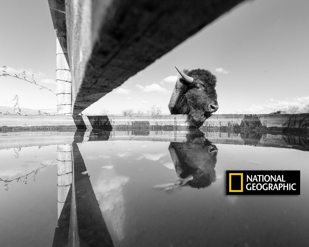 A captivating image, a unique perspective - National Geographic