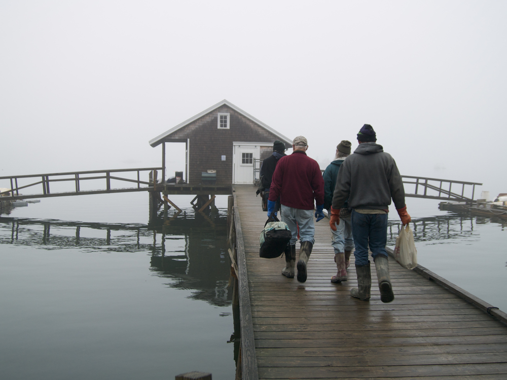 (04/04/09) The crew of Pemaquid Mussel Farms (from left to right), Carter Newell, Peter Fischer, Joe Larrabee and Greg Thompson, head down the dock to the skiff that will take them to the mussel farming barge. The barge, as well as the rafts where the mussels are grown, are anchored just off shore.