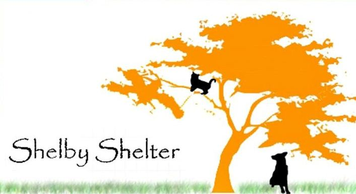 Shelby Shelter, A Place for Healing and A New Life
