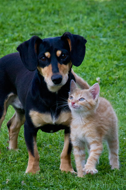 cat-and-dog.jpg