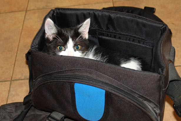 funny-kitten.jpg