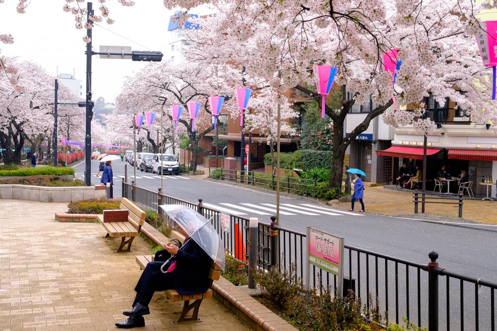 Amiami Sakurai