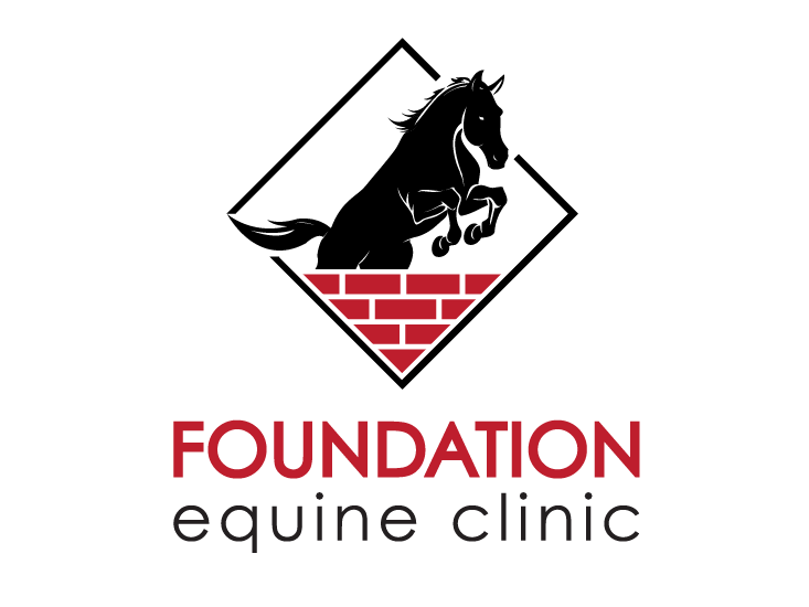 Foundation Equine