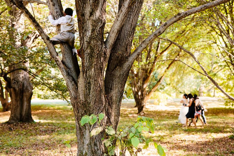 kid tree climbing