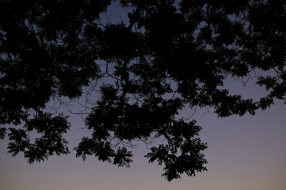 trees outside the museum of science at dusk photographed at wedding reception