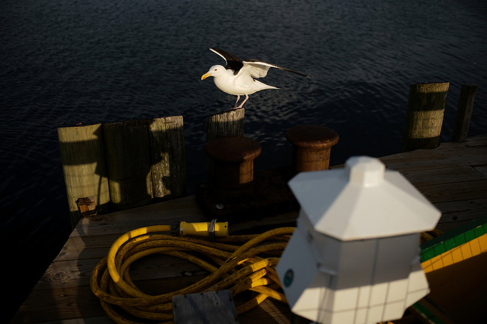 seagull-at-maritime-gloucester-wedding.jpg