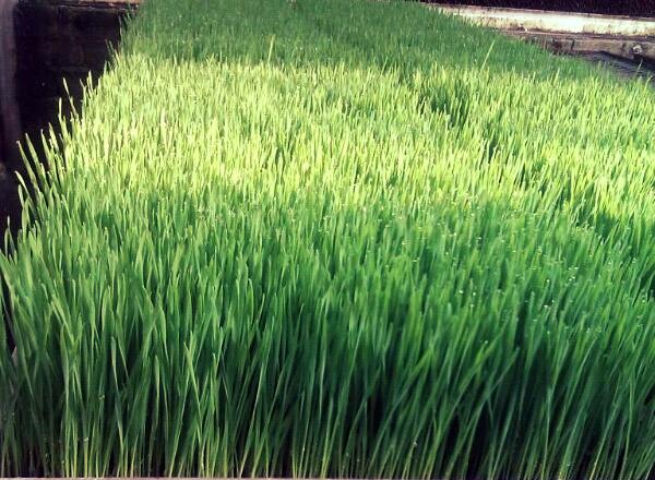 farm grass 1.jpg