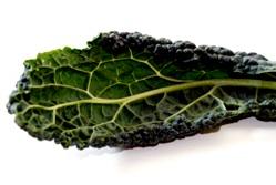 kale-lacinato-leaf-filtered.jpg