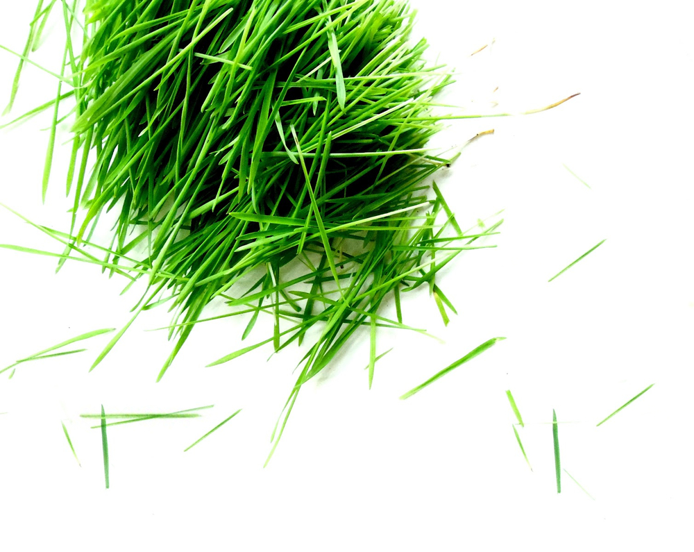CUT_LOOSE_Wheatgrass.jpg