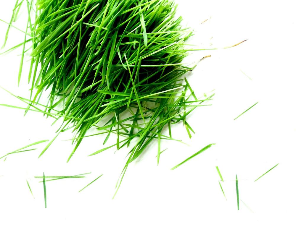 CUT_LOOSE_Wheatgrass.jpg