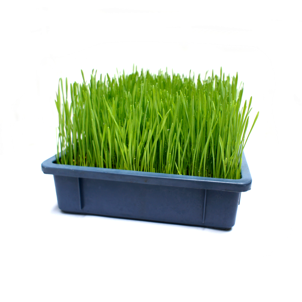 grass bigtray square.jpg