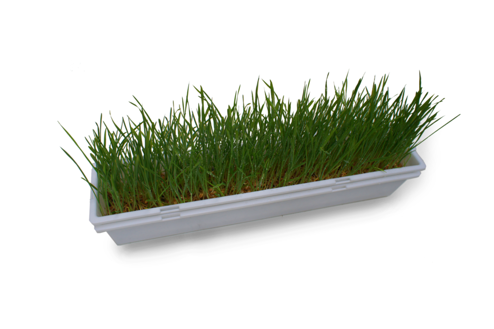 GV_small_tray_grass.png