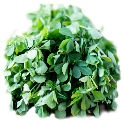fenugreek_green.jpg