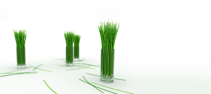 GV_wheatgrass_shots.jpg