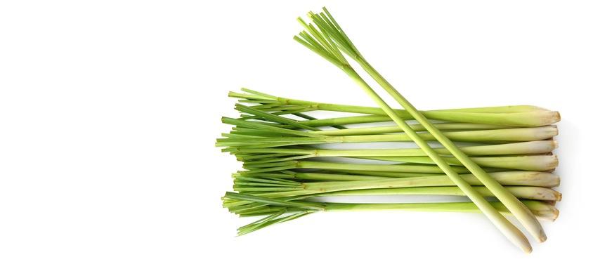 gallery lemongrass.jpg