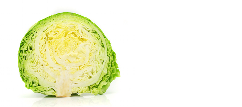 gallery cabbage1.jpg
