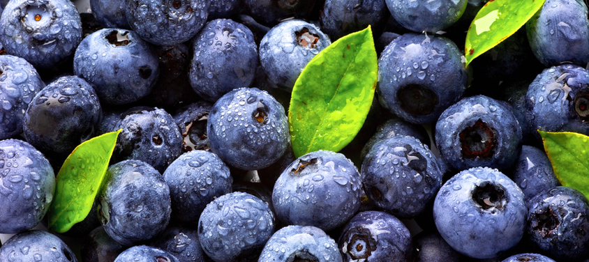 gallery blueberries.jpg