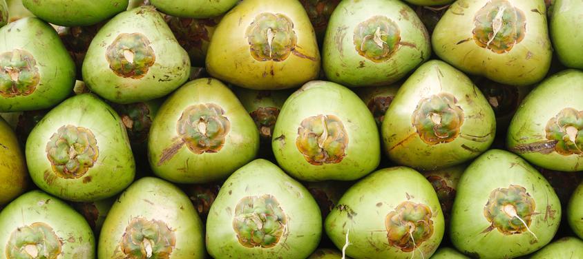 gallery coconuts.jpg