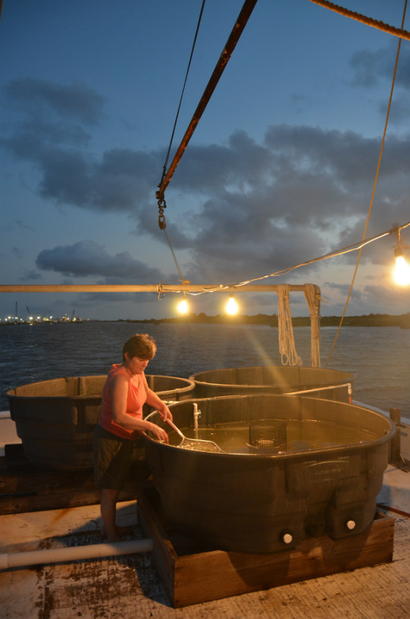 Phyllis Melancon sorts through bait fish and shrimp on her and her husband's boat Tee Tim.  Photo by Michael Pasquier